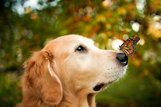 cão-borboleta