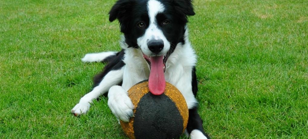 """O poder do """"não"""" no adestramento de cães"""