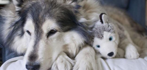 Cães e bichos de pelúcia: dupla inseparável