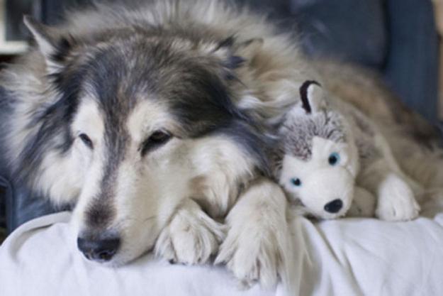 cães-pelúcia-4